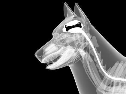 Röntgenuntersuchungen